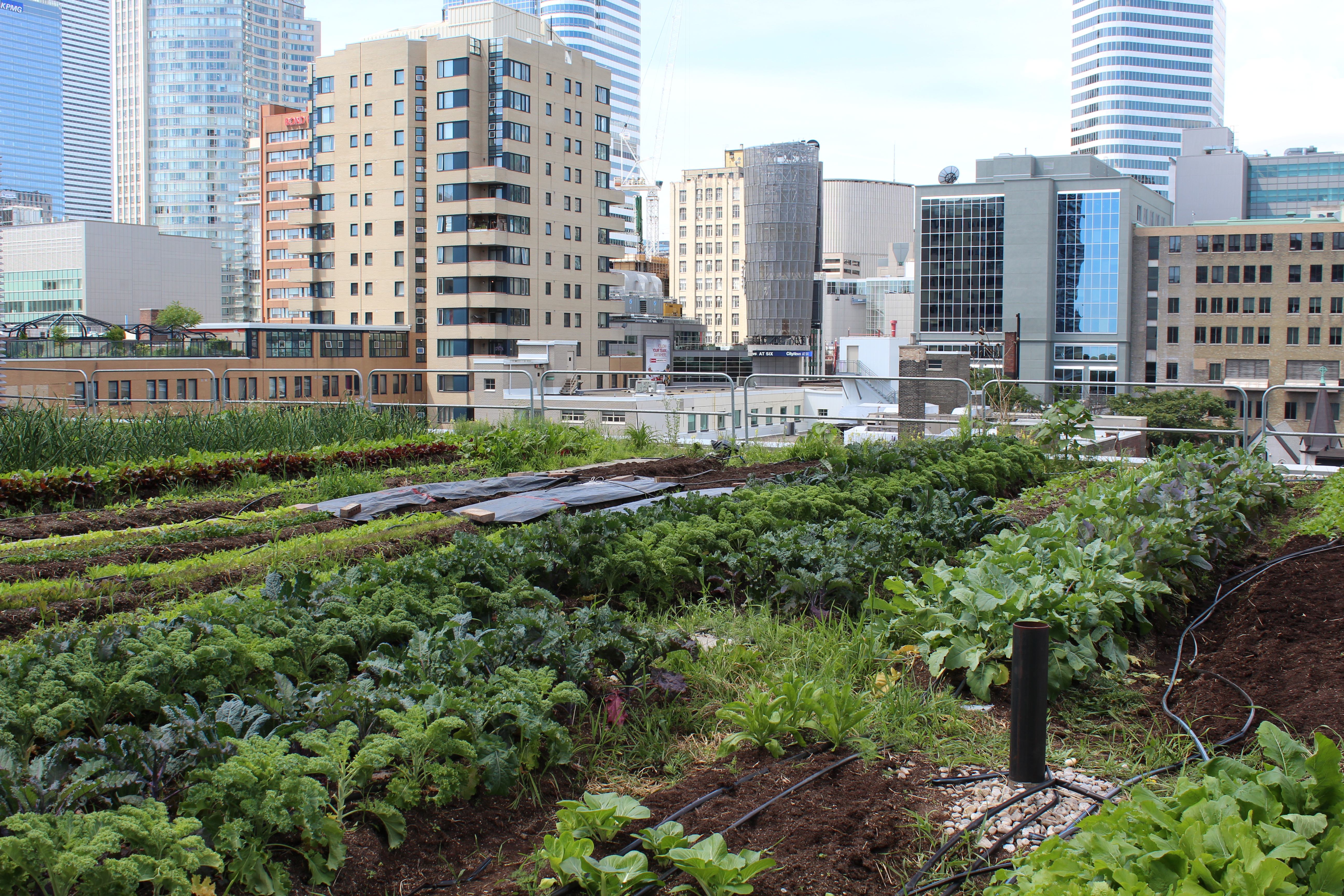 Urban Farming Roof