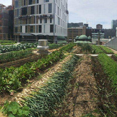 Green Roof Growing Medium What S So Special About It