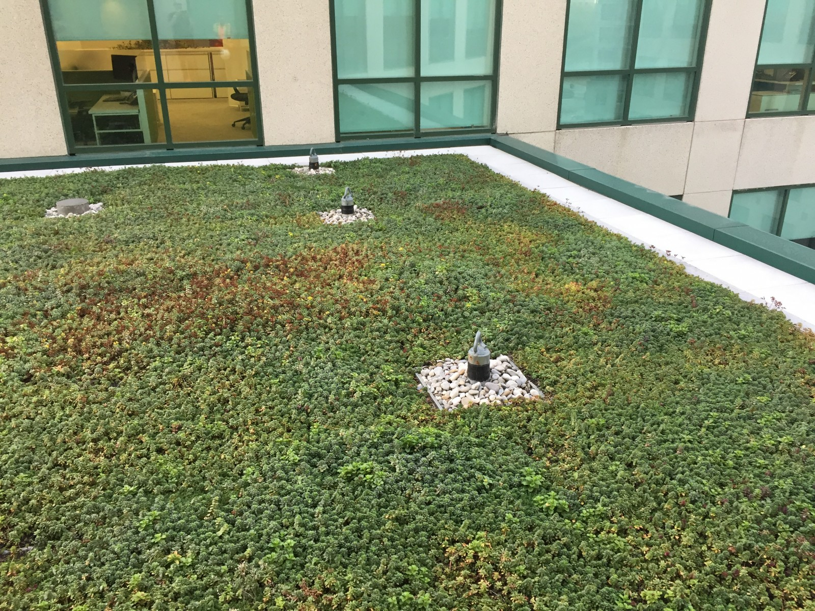 Extensive Sedum Roof Zinco Canada